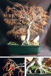 Sal Villano Wire Tree Sculpture - 秋天 Bonsai - 线  树 雕塑 ,  通过 Sal Villano